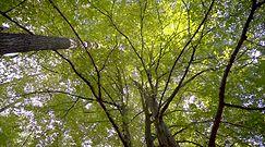 Dlaczego lasy są trendy? Bo korzystnie wpływają na zdrowie psychiczne i fizyczne ludzi