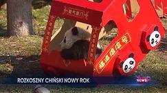Chiński nowy rok. Tak przywitały go pandy