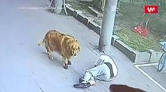 Kot spadł mu prosto na głowę. Emeryt musiał spędzić w szpitalu 23 dni