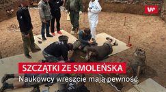 W Smoleńsku znaleziono szczątki. Badania DNA zdradziły do kogo należały