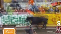 Kostaryka: Chwile grozy podczas walki byków
