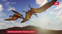 Nowe gatunki pterozaurów