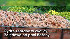 Wielkie grzybobranie Polaków. Zdjęcia czytelników WP