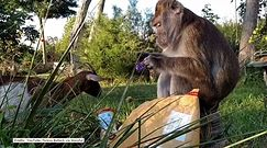 Łakoma małpa