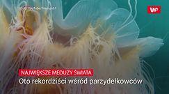 Największe meduzy świata