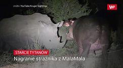 Starcie tytanów. Niezwykłe nagranie strażnika w parku narodowym