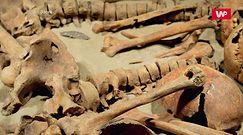 Przerażająca zbrodnia sprzed 5000 lat. Ponure odkrycie w polskich Koszycach