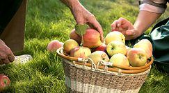 2 jabłka dziennie - jedz na zdrowie!