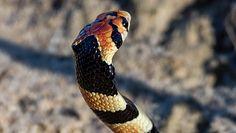Wąż uciekł z terrarium. Groźny gad sterroryzował cały blok