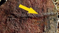Naukowcy zdumieni. Odkrycie sprzed 550 mln lat