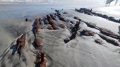 Statek pod piaskiem. Erozja odsłoniła 200-letni wrak