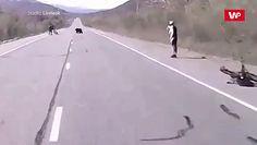 Spotkanie z niedźwiedziem. Wszystko nagrała kamera samochodu