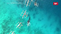 Morskie olbrzymy. Niesamowite nagranie z drona