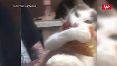 """""""Nie oddam"""". Zabawne nagranie kota z pizzą"""