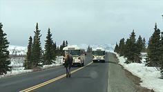 Łoś blokował ruch na drodze. Zwierzak nic zwracał uwagi na auta