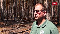 """Pożary lasu w Potrzebowicach. """"Pięć z nich to celowe podpalenie"""""""