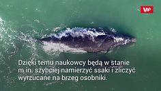 Co roku ocean wyrzuca ich setki. Naukowcy wreszcie mają szansę na przełom