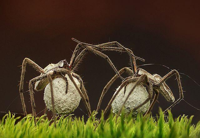 W sieci pająka