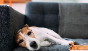 Światowy Dzień Psa. 1 lipca świętują psy małe i duże, kundle i rasowe