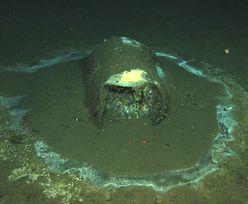 Ogromne ilości toksycznej substancji na dnie oceanu. Oszałamiające odkrycie naukowców