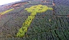Irlandia - tajemniczy, celtycki krzyż w środku lasu