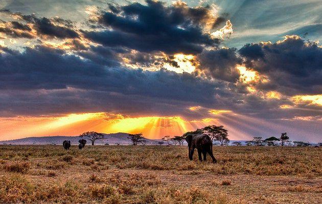 Selous, Tanzania