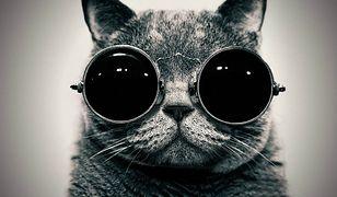 W latach 60. CIA usiłowało wykorzystać koty w roli żywych urządzeń podsłuchowych