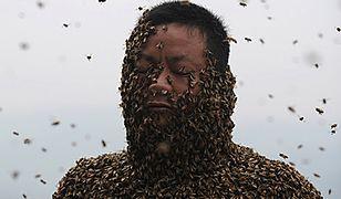 Obsiadło go ponad 460 tys. owadów