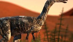 Szczątki nowego gatunku dinozaura odkryto w Brazylii