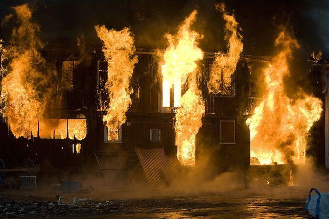 Wyniki badania są szokujące - uciekając przed pożarem prędzej zostawimy zwierzaka niż telefon