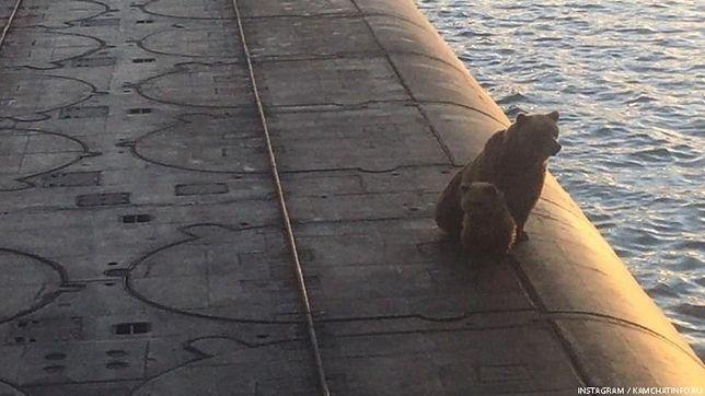 Niedźwiedzica i młode weszły na łódź podwodną. Rosyjscy marynarze je zastrzelili