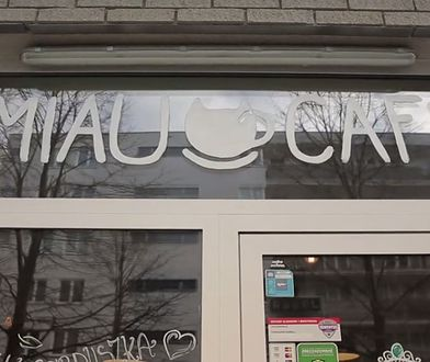 """Skandal w pierwszej """"kociej"""" kawiarni w stolicy. Pracownicy oskarżają właścicielkę o mobbing"""