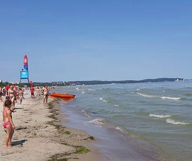 Sinice znów pojawiły się u wybrzeży Bałtyku