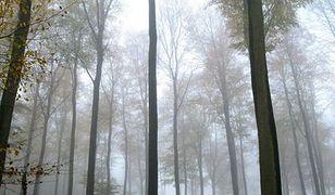Leśnicy liczą straty