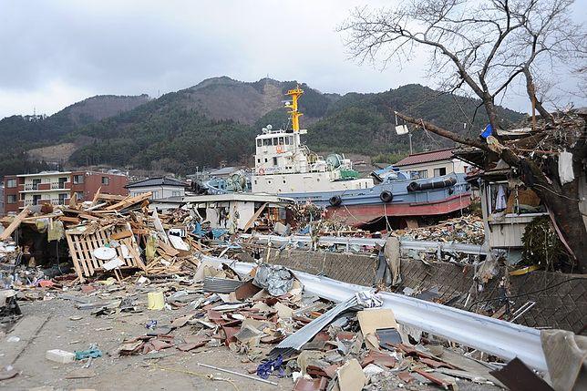 Zaskakujący efekt katastrofalnego tsunami. Milion zwierząt przeniosło się do USA