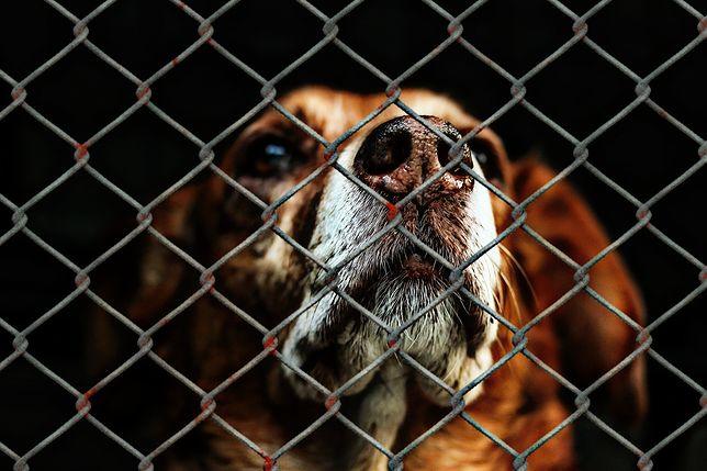 Pies powieszony koło schroniska. Nagroda za wskazanie sprawcy