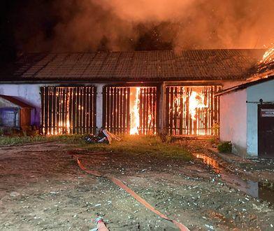 Dramat w Żukowie. Zwierzęta spłonęły żywcem w pożarze