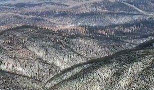 Tak wygląda Parku Kościuszki w Australii po przejściu niszczącej fali ognia
