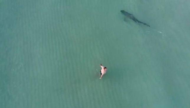Kąpiący się ludzie prawdopodobnie nie mieli pojęcia o tym, że tuż obok pływa rekin