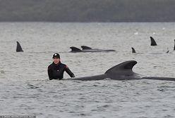 Zginęły setki wielorybów. Smutny rekord i zagadkowa przyczyna