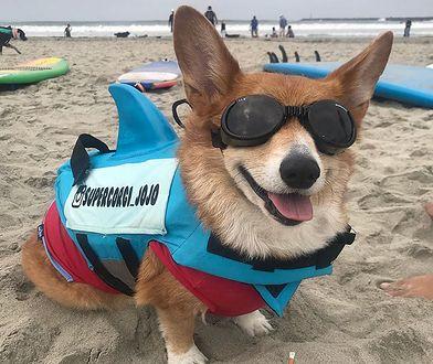 Jojo jest nadzwyczaj aktywnym psem, mimo iż kiedyś ledwie uszedł z życiem.