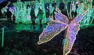 Królewski Ogród Światła w Wilanowie. Magiczna atrakcja w stolicy
