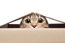 """Naukowcy stworzyli szczepionkę, która może powstrzymać uczulenie """"na koty""""'."""