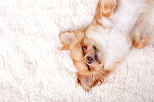 Miękki dywan to świetny sposób na uczynienie wnętrza bardziej przytulnym