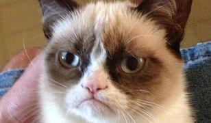 Atlas kotów pod choinkę? Wiemy, gdzie go kupić!