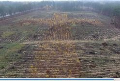 Podlaskie: Wielki krzyż z drzew poświęconych przez papieża