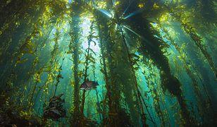 Podwodny las zachwycił Martynę Wojciechowską. Niezwykłe zdjęcia
