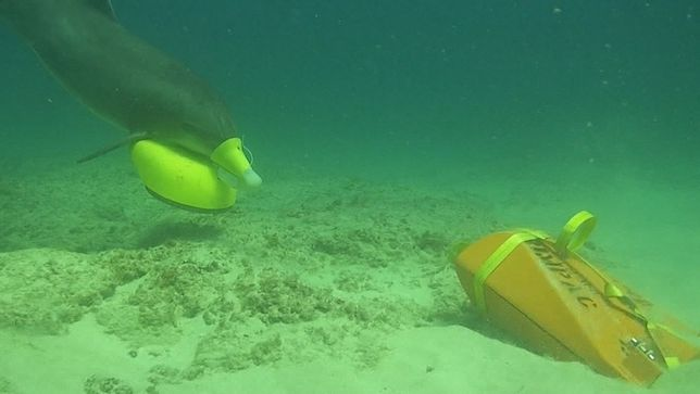 Delfiny wyszukują miny