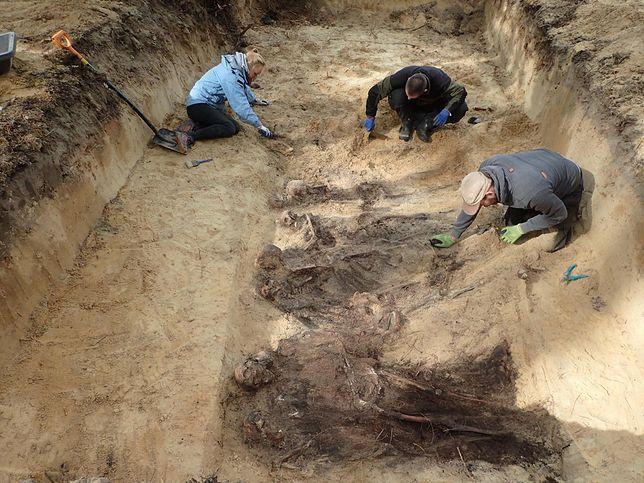 W bydgoskim lesie znaleziono 300 ciał. Część z nich ma obcięte głowy