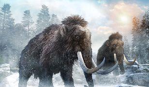 Warszawa - mamut zatrzymał prace budowlane na terenie Woli.
